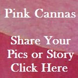 Click here to share your story with others!