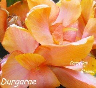 canna Durgarae