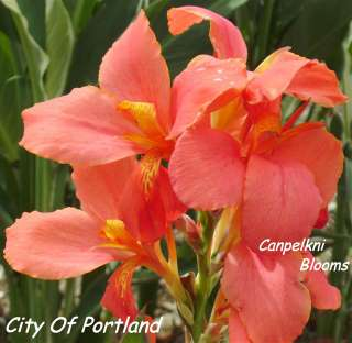 Canna City of Portland