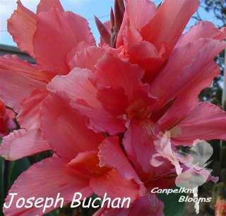 Canna Joseph Buchan