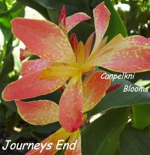 Canna Journeys End