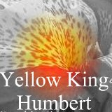All about the canna Yellow King Humbert