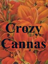 Crozy Cannas raised in France names and descriptions