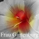 All about canna Frau Gartenburg