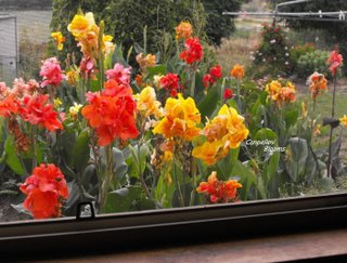 My view of cannas in the garden whilst doing the dishes