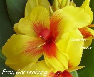 tropical green leaves from Frau Gartenburg
