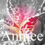 Read about canna Annjee