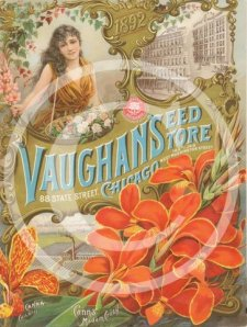 Vaughan's Seed Store Chicago, New French Gladiolus Flowered Cannas, the many beautiful varieties raised and sent out have made rapid strides in popular favour and demand.