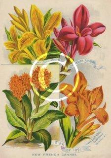 James Vick's Son's Seedsmen garden photo print