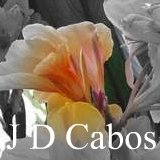 All about the canna J. D. Cabos