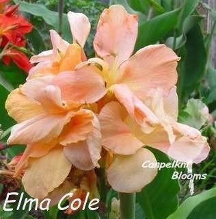 Pretty garden flowers from Elma Cole
