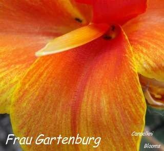 picture of garden canna frau gartenburg