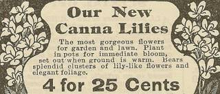 picture of heirloom canna lilies ad