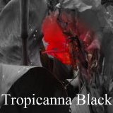 All about canna Tropicanna Black