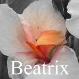 All about the canna Beatrix